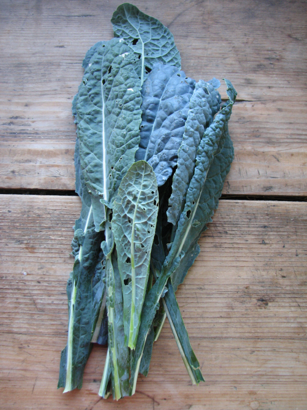 Cavolo Nero Kale
